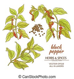 black ground pepper branches on white background