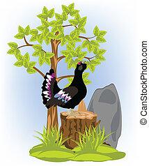 Black grouse on hemp