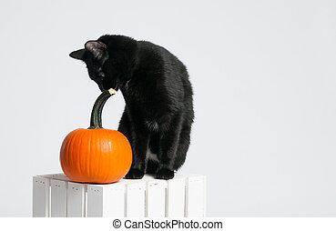 black halloween cat with a pumpkin
