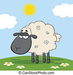 Black Head Sheep On A Meadow