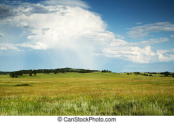 Black Hills South Dakota - The Black Hills in Custer State...