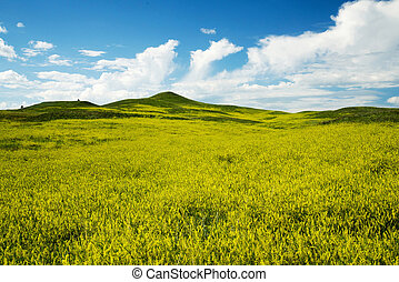 Black Hills South Dakota - The Black Hills in Custer State...