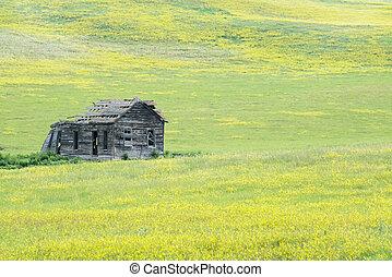 Black Hills South Dakota - The ruins Black Hills in Custer...