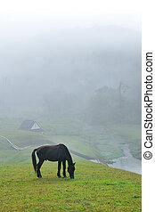 Black horse eating grass field amidst fog in morning