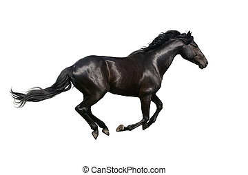 Black horse galloping on white - Beautiful horse isolated on...