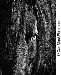 A close up a horse in black and white.