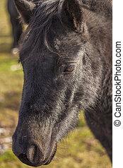 Black horse head closeup