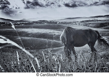 black horse in a meadow