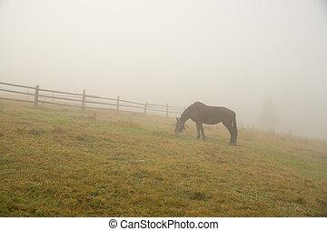 Black horse in fog, grazing on green field