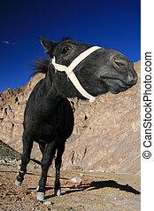 Black Horse, India