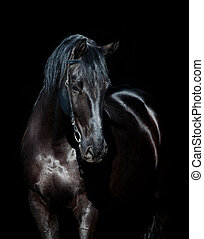 Black horse isolated on black background.