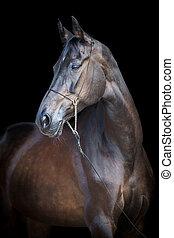 Black horse isolated on black - Black horse portrait ...