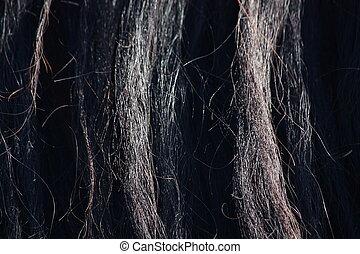 Black horse mane close up - Beautiful black horse mane close...