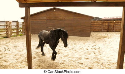 Black horse on the ranch - Adult black horse on the farm