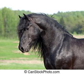 Black horse portrait in field.