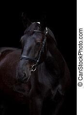 Black horse portrait on black background