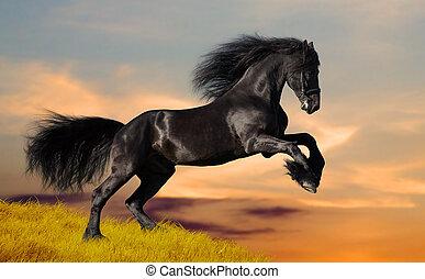 Black horse runs at sunset