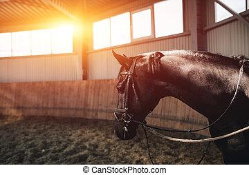 Black horse standing in the dark manege