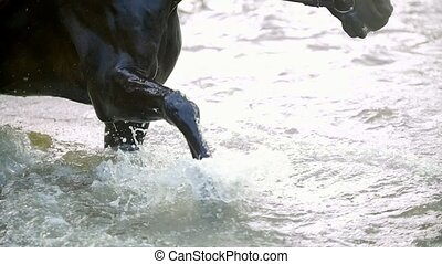 Black horse stomps his hoof on the river and splashes water,...