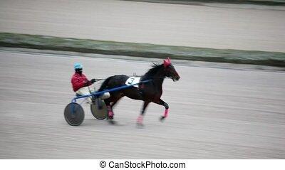 horsy carries jockey in carriage on hippodrome track - black...