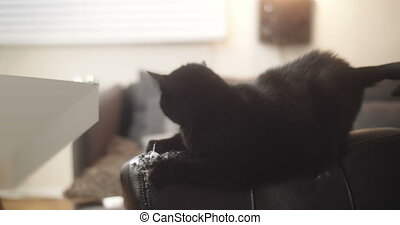 Black house cat damaging a new leather chair. - Black house...