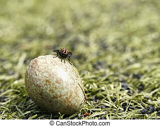 Black house fly found cracked empty bird shell. The bird eggshell in the grass.