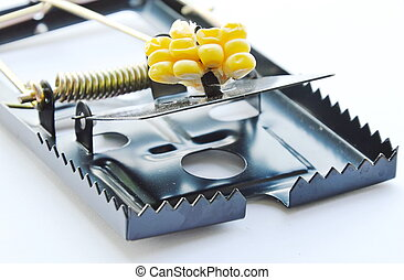 black iron mouse trap bait by corn seed on white background