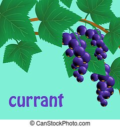 black, juicy, sweet currant on a branch for your design. Vector