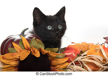 Black kitten and fall decorations