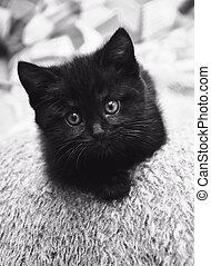 black kitten at home