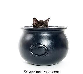 Cute black kitten inside of caldron on white background