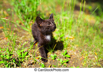 Black kitten in the green grass