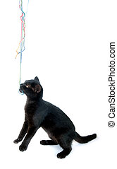 Black kitten playing with yarn