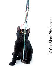 Black kitten playing with yarn