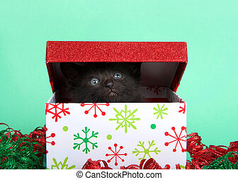 black kitten popping out of a christmas holiday box