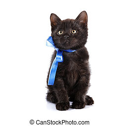 Black kitten with a blue bow.