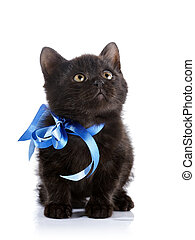 Black kitten with a blue tape.