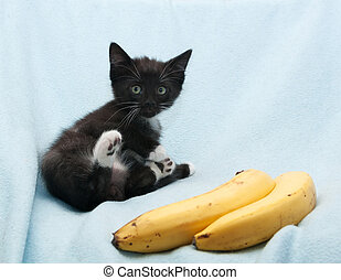 Black kitten with green eyes and white paws sits next to yellow bananas on blue background
