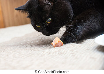 Black kitten with Sausage at home