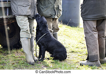black lab wellies