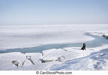 Black Labrador dog sitting in winter landscape