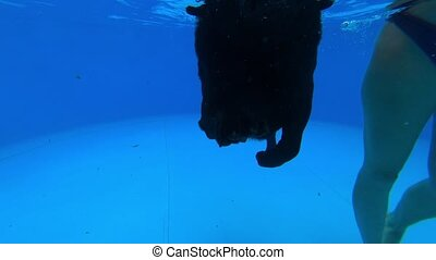 Black labrador in a pool - Black dog labrador retriever ...