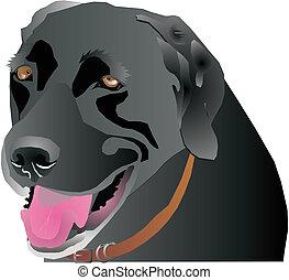 Black Labrador profile - Black Labrador head profile, over...