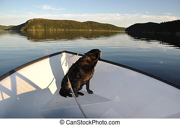 Black labrador retriever in boat