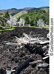 black lava flow on green slope of Etna