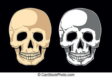 black., laye, mänsklig skalle, separat