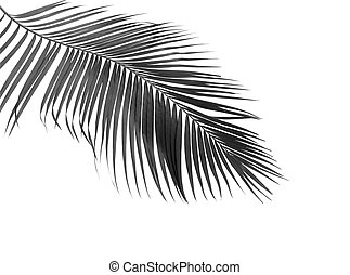 black leaf of palm isolated on white background
