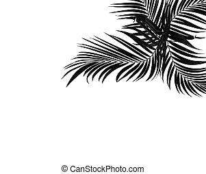 black leaf of palm treeon white background