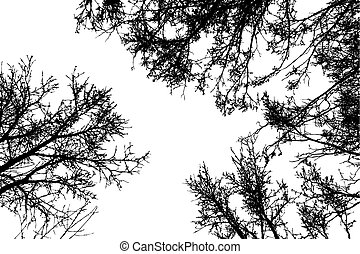 Black leafless tree branches - Grunge crooked tree branches ...