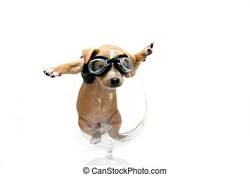 Black leather clad puppy - Puppy wearing goggles and black...